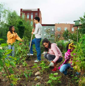 Donate Seeds to Community Gardens