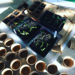 SELF-SUFFICIENT SEEDLINGS