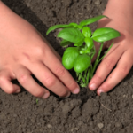 Tips To Get Kids Gardening
